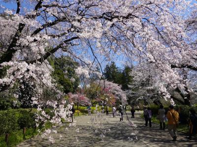 春の神代植物公園と深大寺 2020