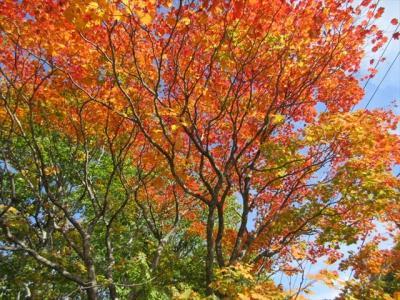 蒸ノ湯温泉の紅葉