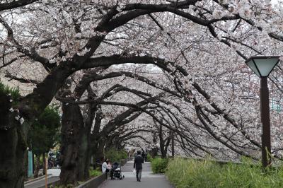今年東京最後の花見 目黒川の桜