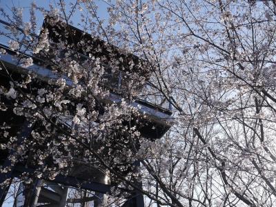 つくば 反町の森公園の桜☆リヨン・ド・リヨン☆2020/03/25