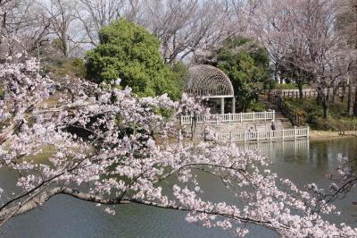 ちょいと気の早かった近所の公園の桜散策~好天の気持ちの良い日を選んで