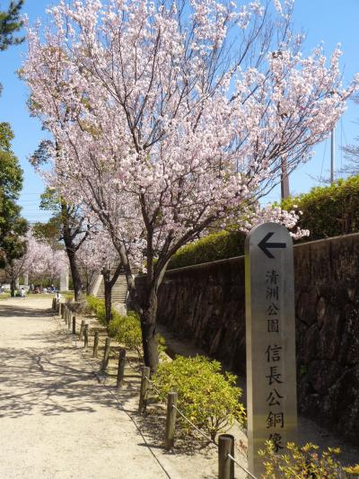 清州城の桜です〈1〉