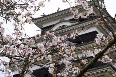 20200328-1 大洲 大洲城と、見頃までも少しな染井吉野と