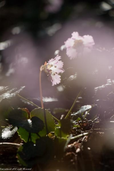 栃木の茂木から那珂川町の花めぐり