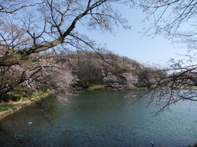 県立三つ池公園のさくら
