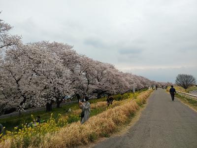 北埼玉2020桜