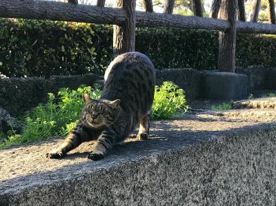 コロナで自粛中!大阪城の城猫ちゃんに癒され日記☆