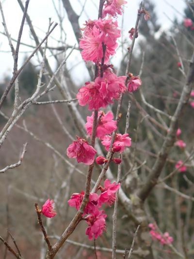 初春や梅花(うめはな)かおる老いの道