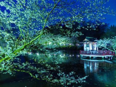ひっそりと桜を見る 昭和の森公園と茂原公園