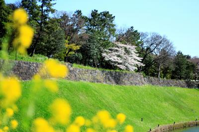 2020年春 千鳥ヶ淵の桜