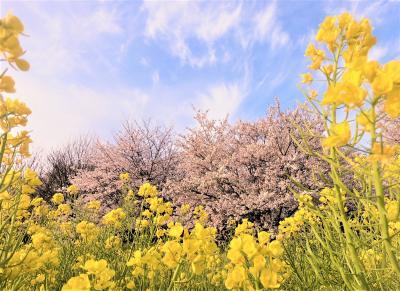 春が奏でるシンフォニー/桜の囁きに 耳をそばだてて