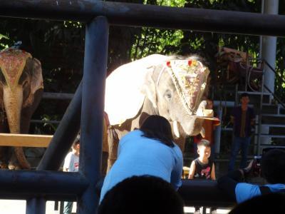 5歳娘を連れて中国シーサンパンナ5日間の旅7-ラストは曼聴公園!そしてシーサンパンナから昆明へ