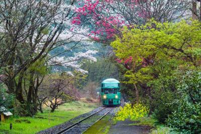 日田の桜巡り 2020