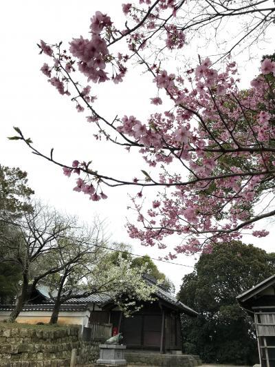 桜がきれいです。阿久比町のお寺(知多四国八十八の十三番~十七番札所)と神社など、ぶらり大人旅。その1