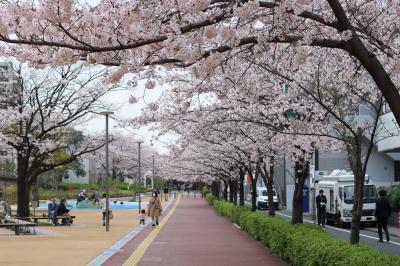 車窓から桜発見 ぶらり途中下車