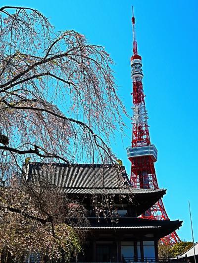 芝公園-1 増上寺・東京タワーあたり/大門駅~歩いて ☆桜の名所-絶好の花見日和に