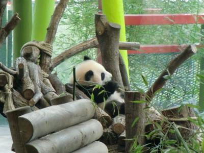 ベルリン動物園に双子のパンダを見に行く