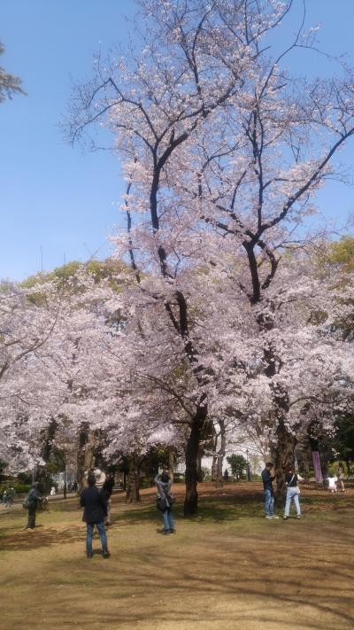 桜の記憶2020-新型コロナ禍の中で