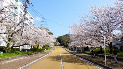 2020年 春 福岡市 桜名所巡り【シェアサイクル利用で西公園に移動編】