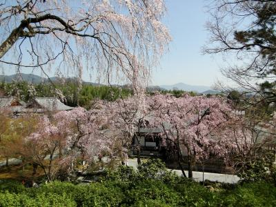 2020春 嵐山散策