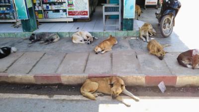 犬とミャンマーと私~愛すべきミャンマーの犬たち、猫たち~【2】