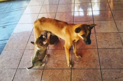犬とミャンマーと私~愛すべきミャンマーの犬たち、猫たち~【3】