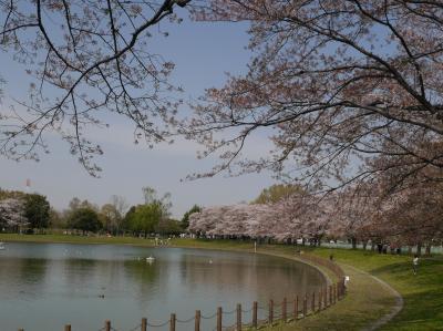 越谷 県民健康福祉村の桜☆2020/04/03