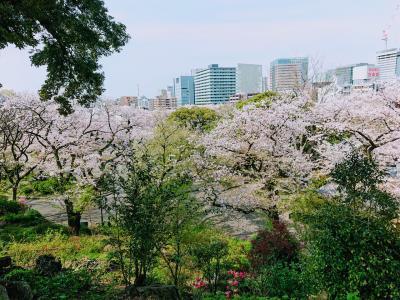 横浜掃部山公園、みなとみらいの桜と赤レンガ倉庫周辺のガーデンネックレス
