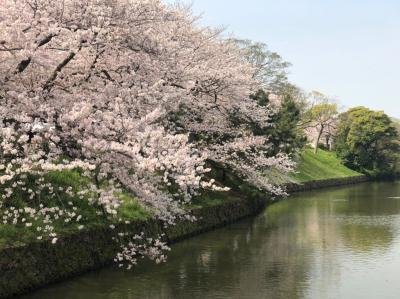今日の花見は桜の名所「鳥飼八幡宮~舞鶴公園~西公園」を孫と二人で散策しました。
