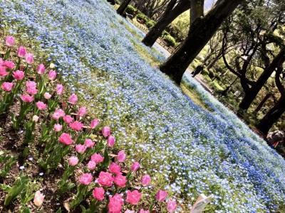 3Mを避けて花々を愛でる街歩き