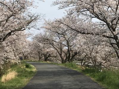 2020年コロナの時期に満開の桜🌸