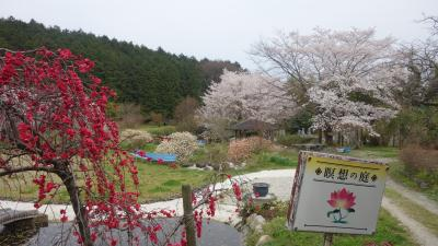 コロナ禍を避け花見かな 大和金剛・葛城・二上山麓九桜花見の旅