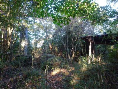 ヤマトタケルの家路1 足柄の坂