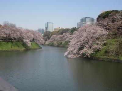 千鳥ヶ淵の桜もコロナ効果