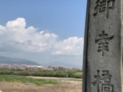 石清水八幡宮から木津川合流点の桜並木!