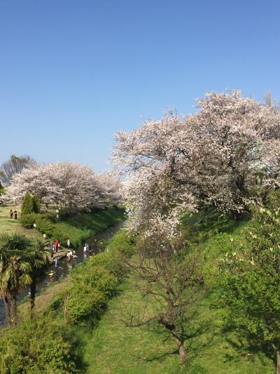 コロナ自粛の中お花見の名所までちょこっとお散歩!