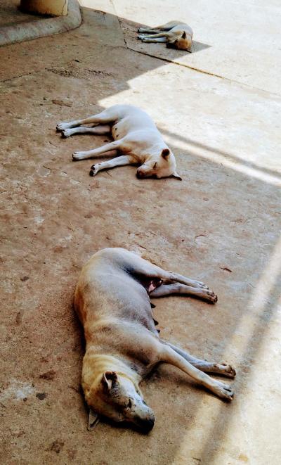 犬とミャンマーと私~愛すべきミャンマーの犬たち、猫たち~【4】