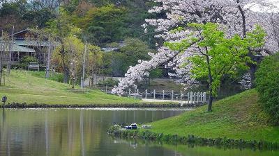 緑ヶ丘公園と瑞ケ池公園の花見をしてきました その1。