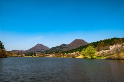 志高湖桜と扇山野焼き 2020