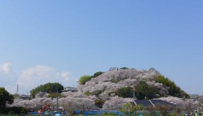 見事な桜でおおわれて!三室山