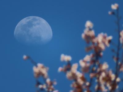 座間の桜散策旅行(散歩)近場のいいとこ発見