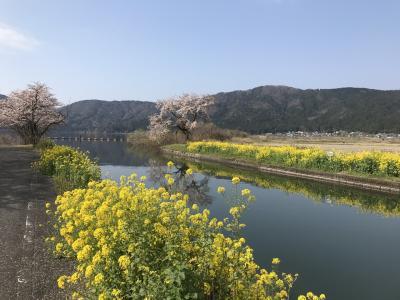 桜三昧「青春18きっぷ」で花見旅:名古屋発、奥琵琶湖(賤ヶ岳・海津大崎)・彦根城