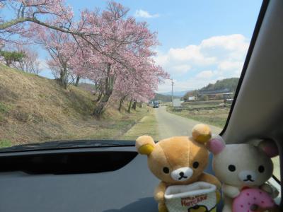 三密を避け、車から桜を見よう ~長野県中信編~
