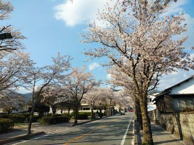 山梨2020桜 【2】武田神社