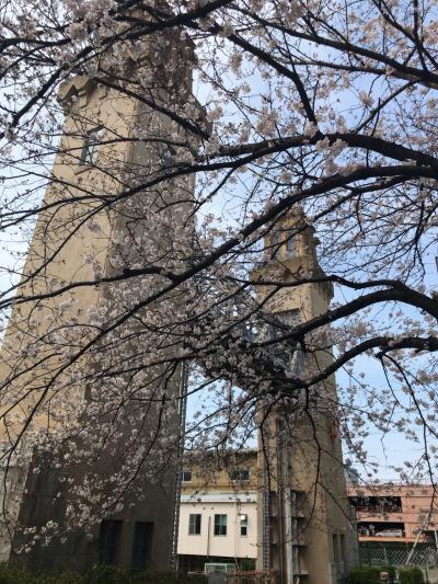 春を感じる桜を見に散策に行ってきました