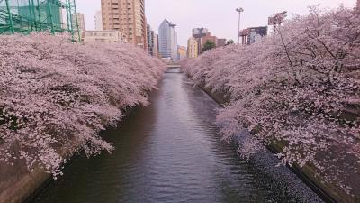 目黒川沿いの桜並木をお花見散歩 2020年