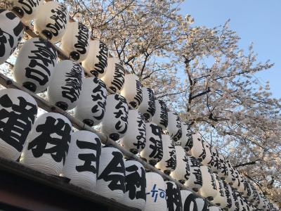 都内の桜を見に行く。(善福寺川、井の頭公園、多摩動物公園、としまえん、上野、横浜、浅草、新宿編)