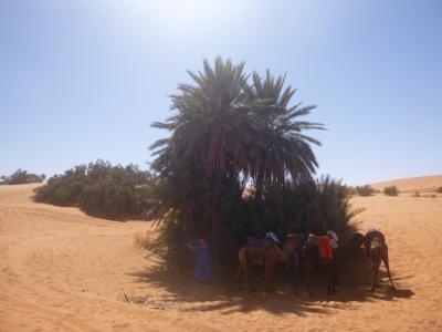 コロナ騒動ど真ん中モロッコ一人旅④~ラクダとサハラ砂漠のど真ん中2泊・アルジェリア国境は目と鼻の先~