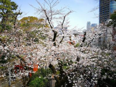 2020春の東京、乃木神社、表参道(03/22)