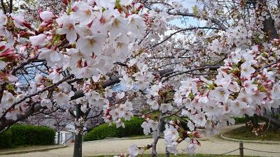 緑ヶ丘公園と瑞ケ池公園の花見をしてきました その8。